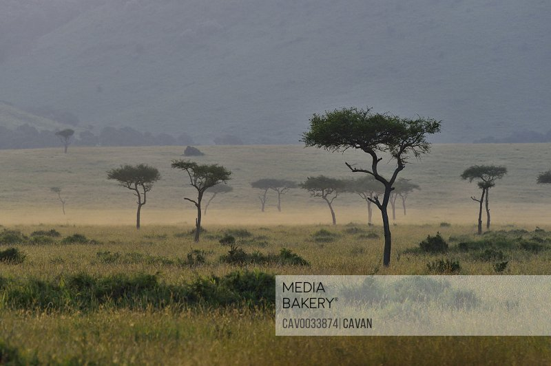 The savannah in East Africa