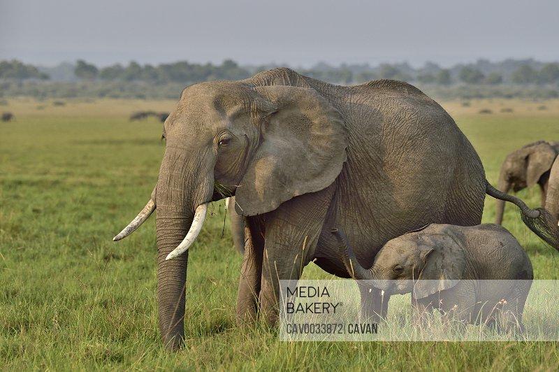 Elephant mom & baby on the savannah