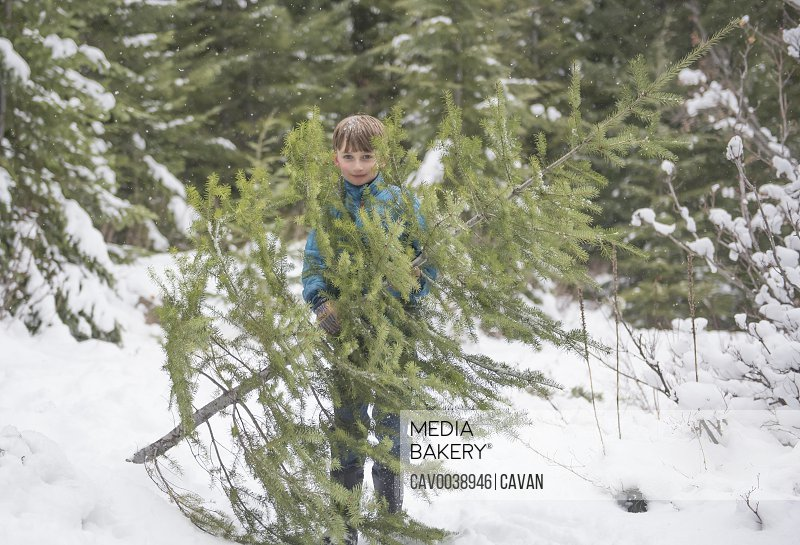 A boy collects a Christmas tree from the forrest.