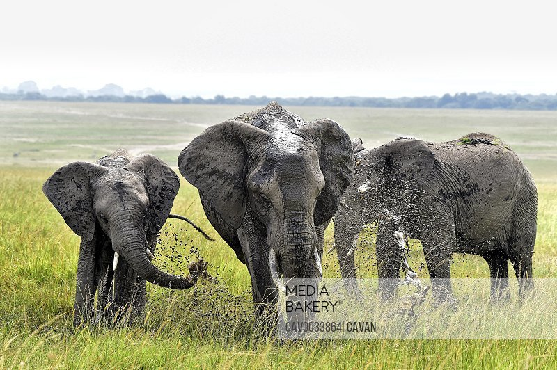 A group of elephants cools off in a watering hole on the savannah