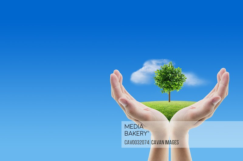 Hand holding grass and tree of nature background with environmen