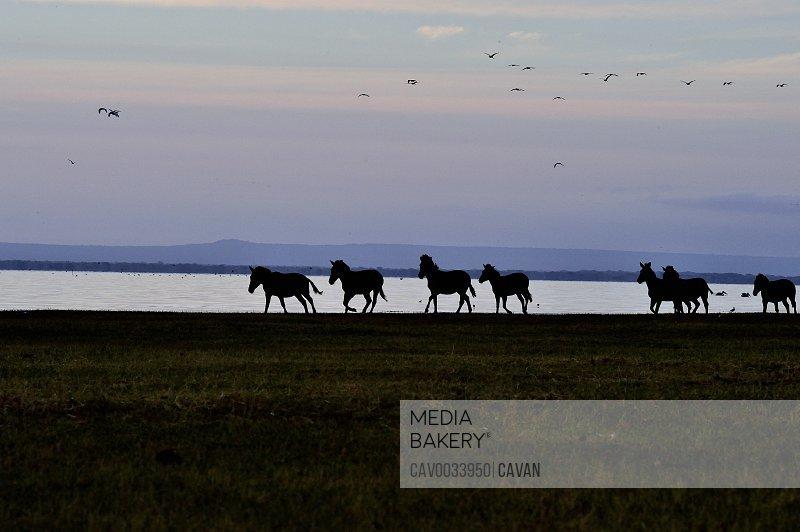 Zebra silohettes at Lake Manyara