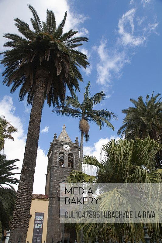 Palm trees and clock tower