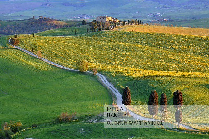 Country road called Gladiator Way and Terrapille farm, Pienza, Tuscany, Italy