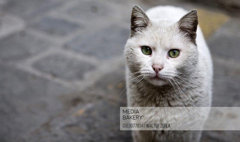 Close up of cat on cobbled sidewalk
