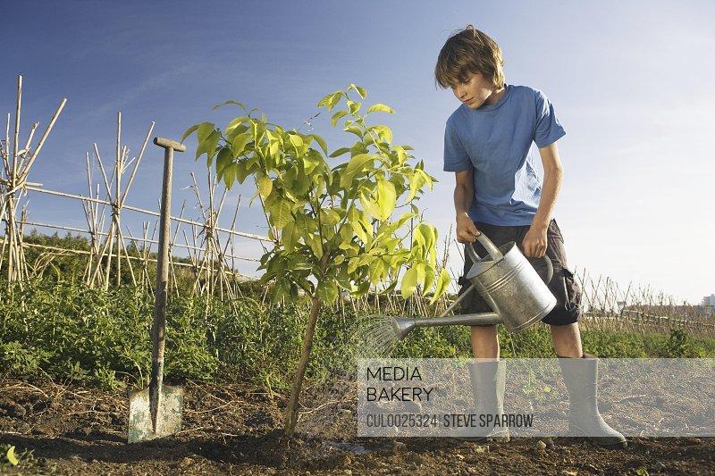 Pre-adolescent boy planting tree