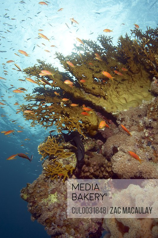 Shoal of fish on reef