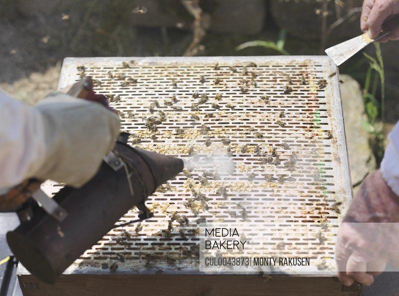 Beekeepers lift queen bee excluder mesh