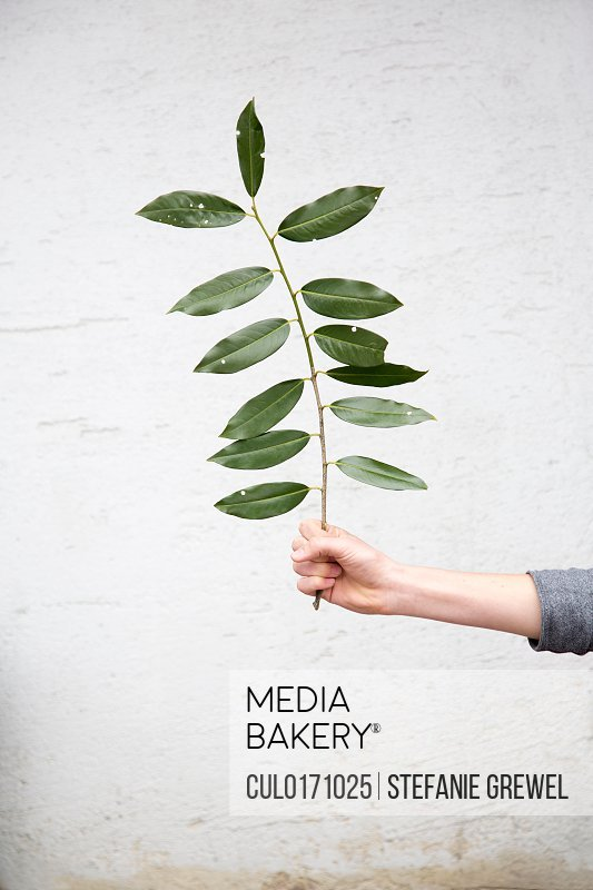 Person holding leafed twig