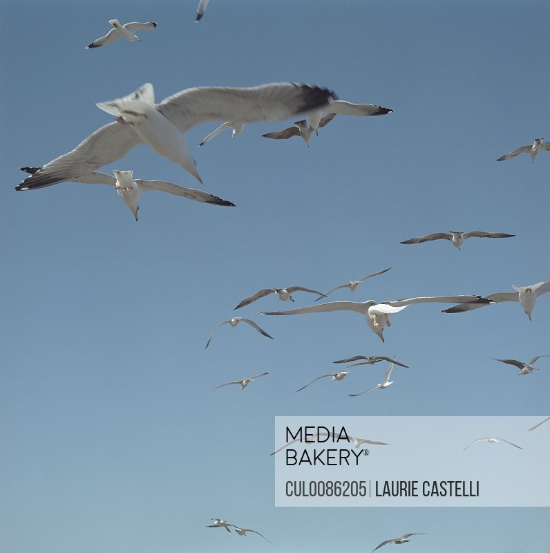 Gulls flying against blue sky