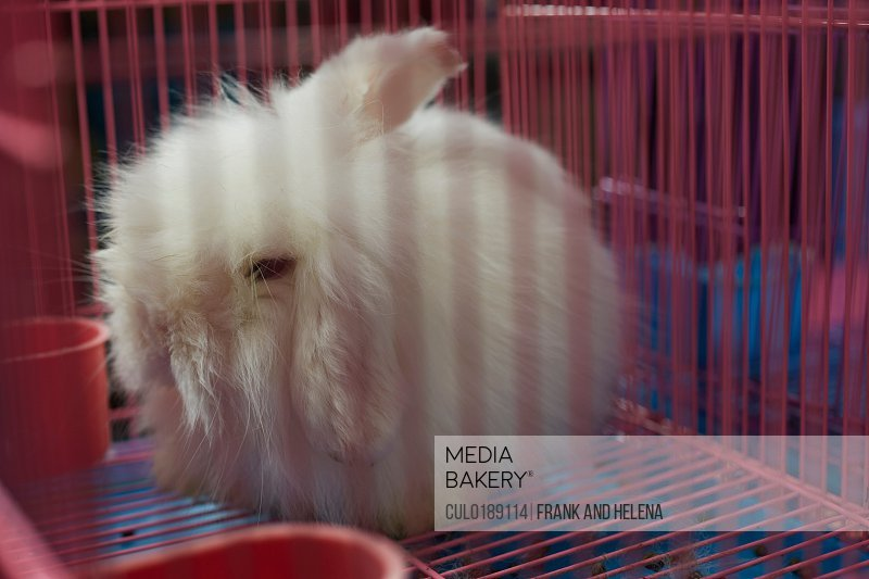 Fluffy white rabbit in cage at Shanghai Bird and Flower Market China