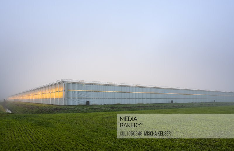 Greenhouses in the Netherlands on a foggy morning