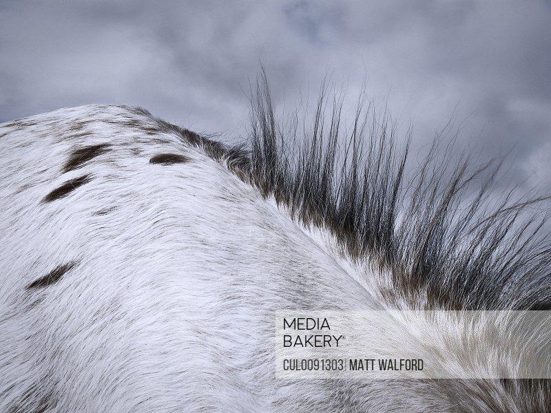 Close up of horse's mane
