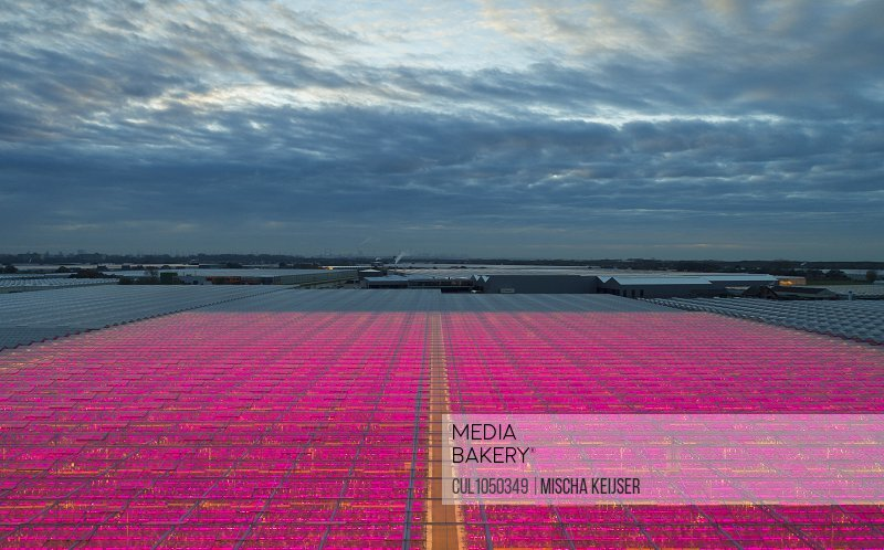 Greenhouses with innovative, energy efficient LED lighting in the Netherlands, at dusk