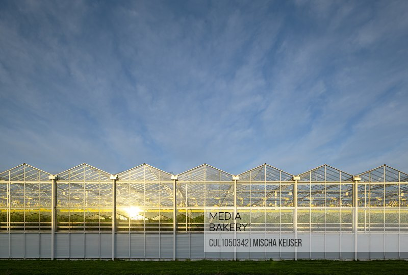 Greenhouses in the Netherlands, at sunrise