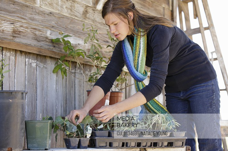 Young woman planting plants
