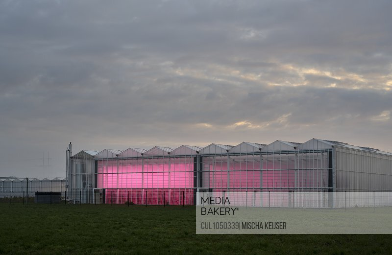Greenhouse with experimental LED lighting, early in the morning