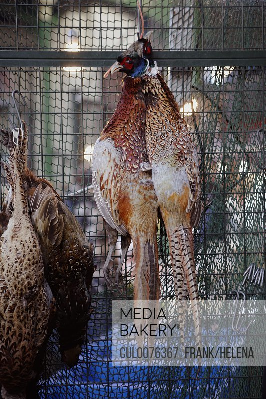 Hanging pheasant for sale