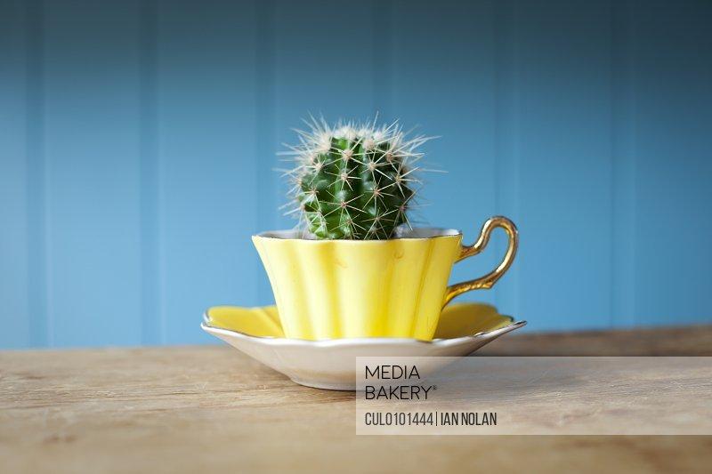 Cactus growing in teacup on desk