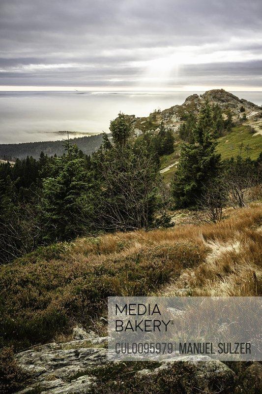Trees in rocky rural landscape