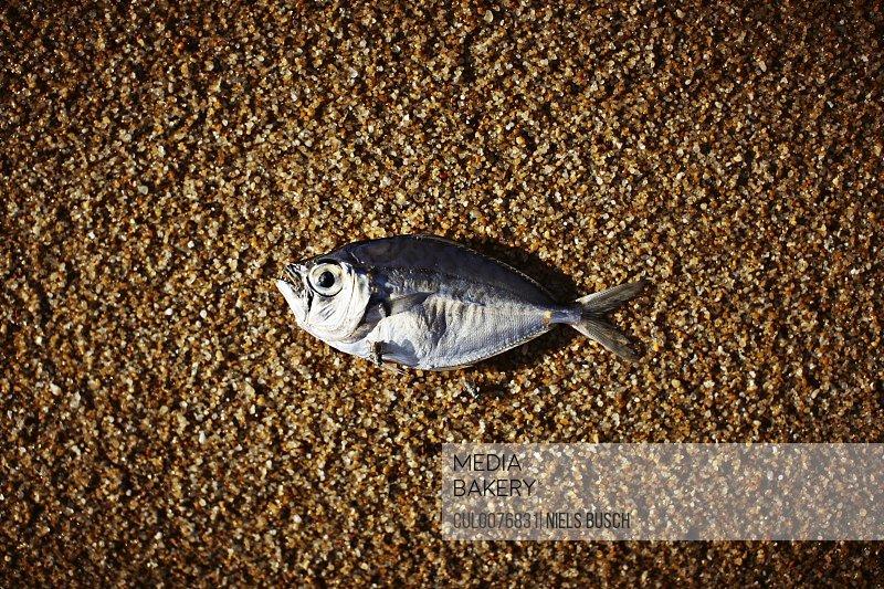 Fish laying on rocky beach