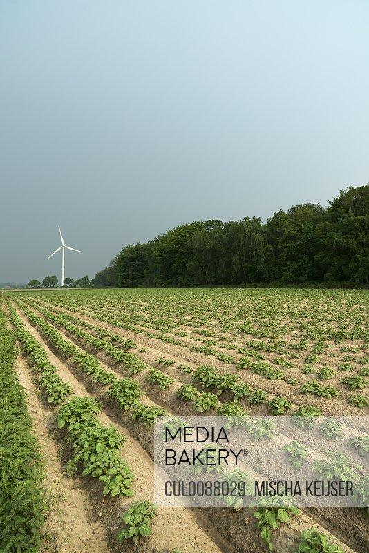 Wind turbine by field