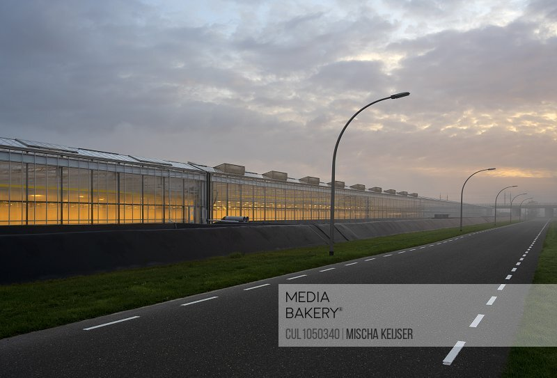 Greenhouses in the Netherlands, early in the morning