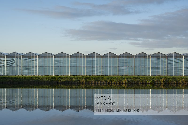 Greenhouses in the Netherlands at dawn
