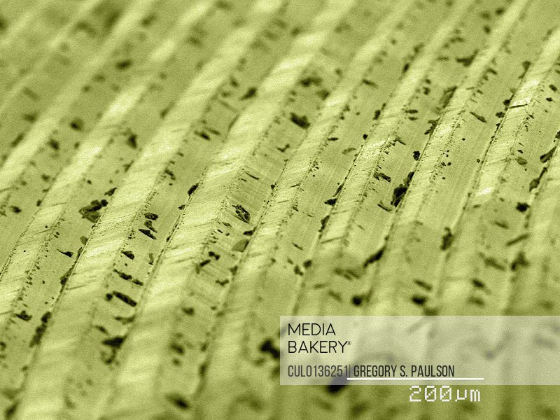 Coloured SEM of grooves on vinyl record
