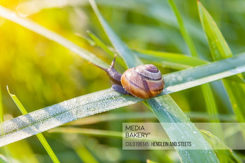 Close up of snail on blade of green grass