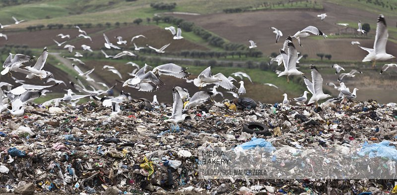 Birds circling garbage collection center