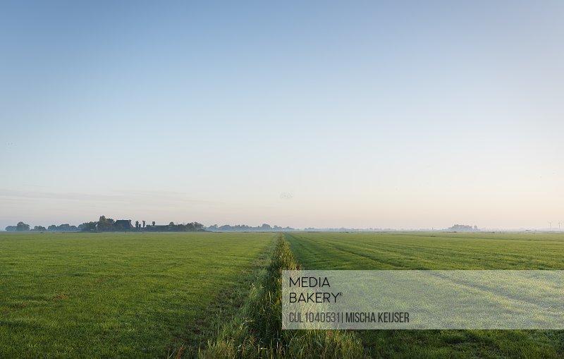 Pasture at dawn, Wyns, Friesland, Netherlands
