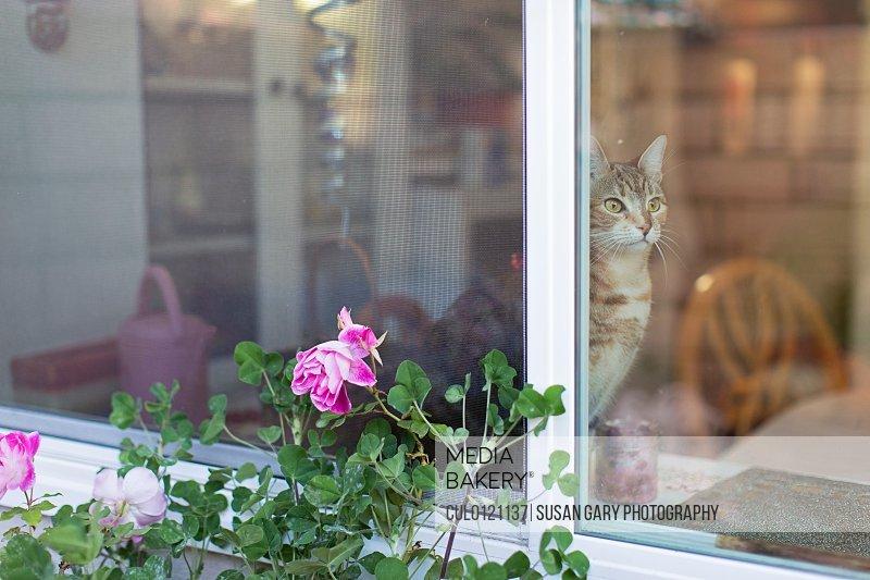 Cat sitting on windowsill/n