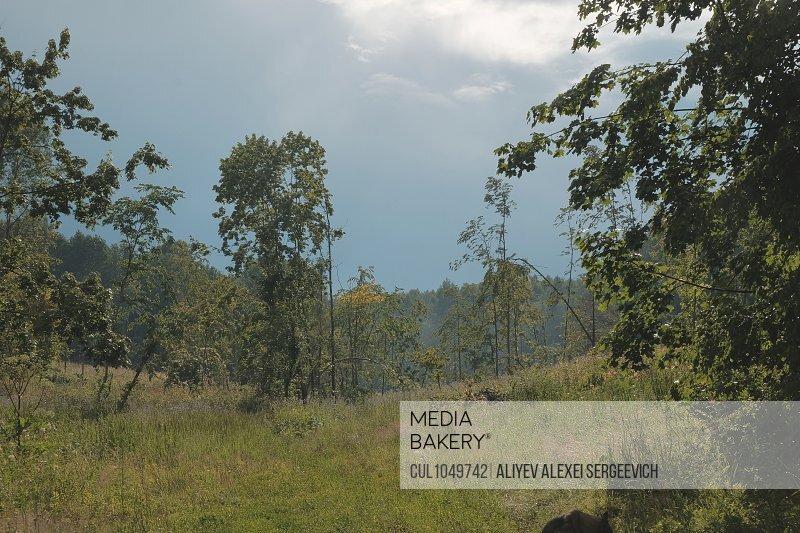 Rural nature scene