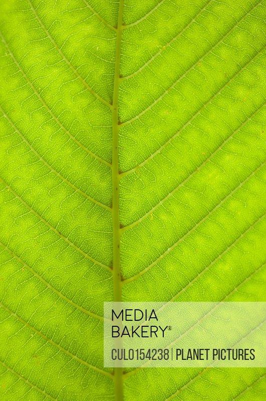 Still life close up of green leaf