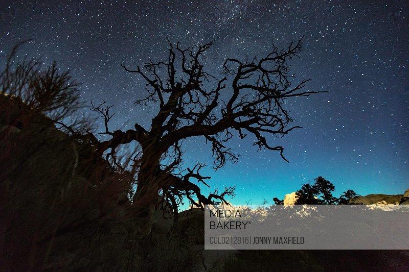 Photo By Cultura Images Silhouette Of Joshua Tree And Starry Night Sky Joshua Tree National Park California Usa