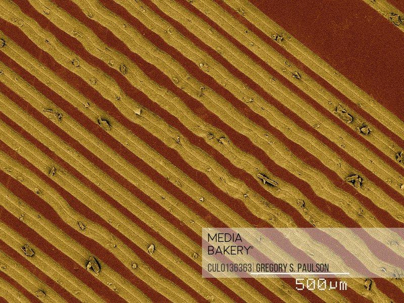 Coloured SEM of grooves on vinyl record