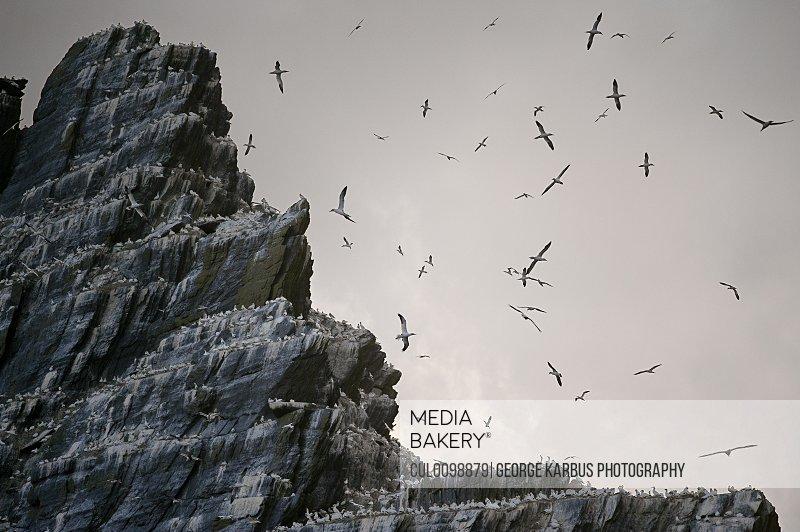 Sea birds roosting on cliffs