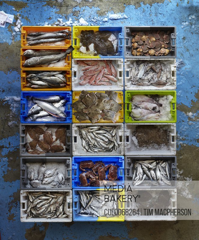 Overhead view of creates of seafood