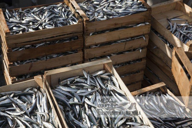 Freshly caught fish in crates
