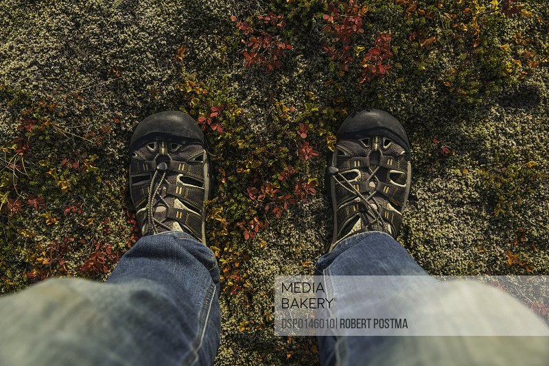 Person's feet standing the autumn colours of the Icelandic tundra; Iceland