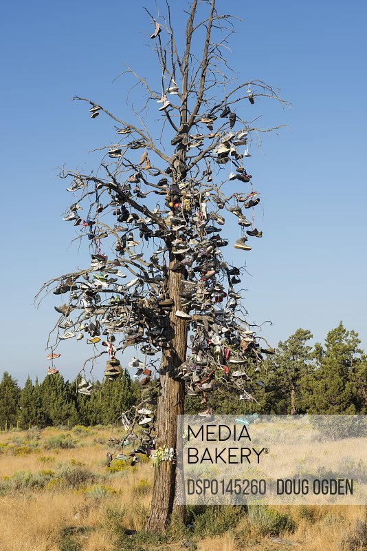 The Shoe Tree along highway 97, near Bend; Oregon, United States of America