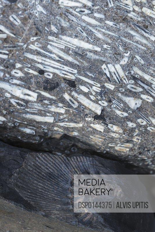 Fossil of calamari (top) and trilobite in Los Glaciers National Park, Argentine Patagonia; El Calafate, Santa Cruz Province, Argentina