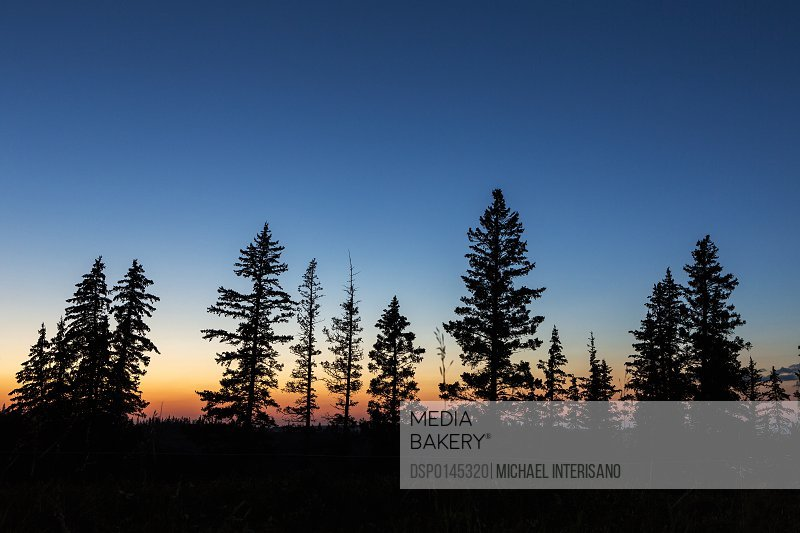 Colourful twilight sky with a row of silhouetted evergreen trees; Elkwater, Alberta, Canada