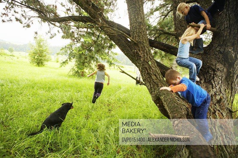 children climbing tree