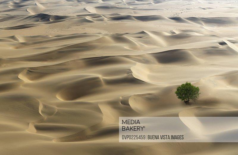 Lone tree in a desert