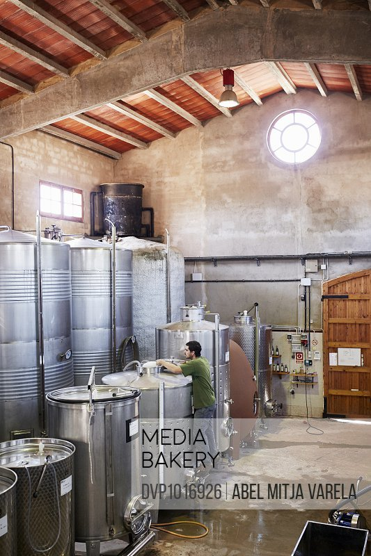 Male worker working at winery