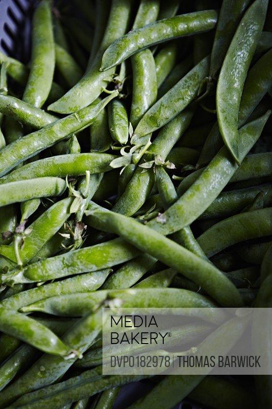 Fresh organic sugar snap peas in pod
