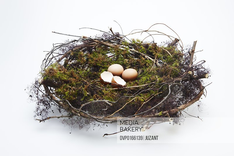 One hatched egg and two unhatched in a nest