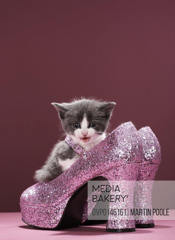 Kitten sitting in glitter shoes